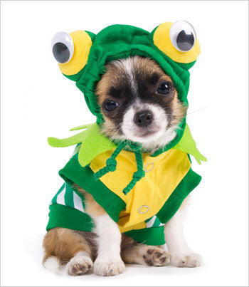chihuahua wearing frog dog costume