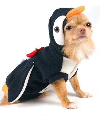 Yorkie Wearing Penguin Dog Costume