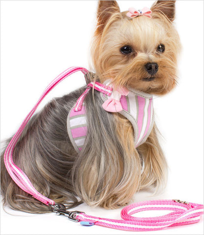 Yorkie Wearing Pink Leash and Harness Set