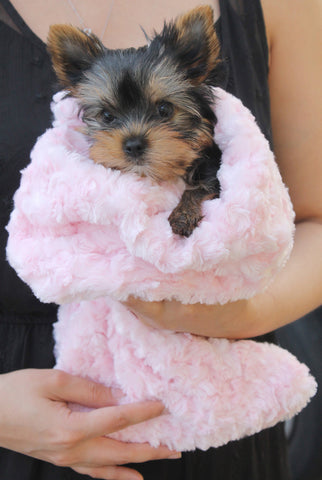Yorkie in Snuggle Pup Sleep Sack by Hello Doggie