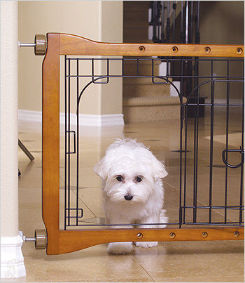 Maltese going through door in dog gate