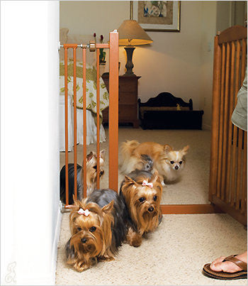 several small dogs behind one-touch pet gate