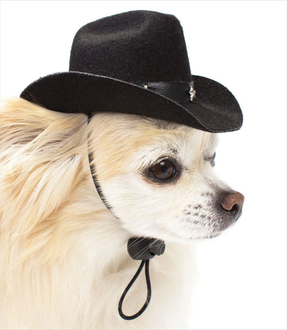 Black Dog Cowboy Hat on Chihuahua