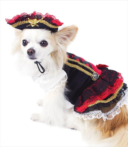 Chihuahua-Swashbuckler-Dog-Costume