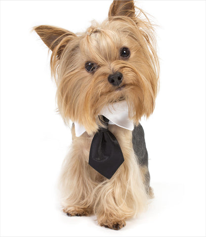 Black Necktie on Yorkie - Road Wagz