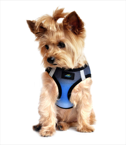 Ombre Dog Harness in Midnight Sky