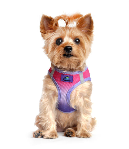 Dog Harness - Ombre Raspberry Sundae