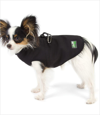 Papillon Wearing Black Harness Jacket