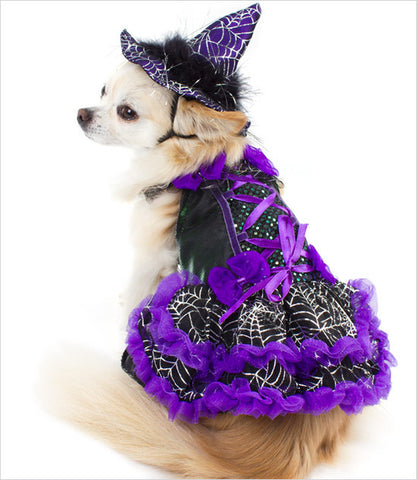 Chihuahua wearing Purple Witch Dog Costume LED