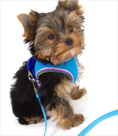 Tiny Dog Harness - Yorkie