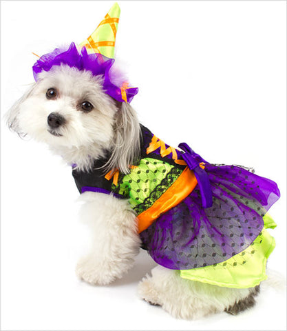 Neon Witch Dog Costume