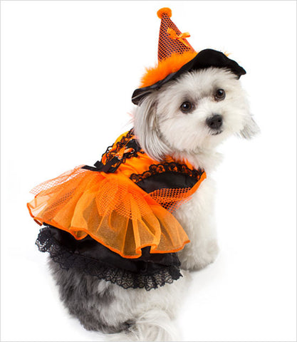 Yorkie Wearing LED Dog Witch Costume