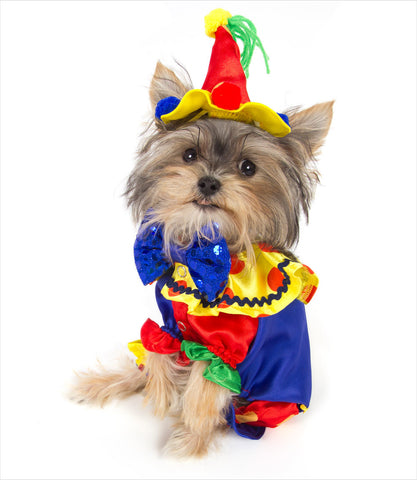Dog Clown Costume - Yorkie
