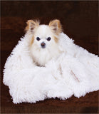 Peluche Plush Powder Puff Dog Blanket - Ivory