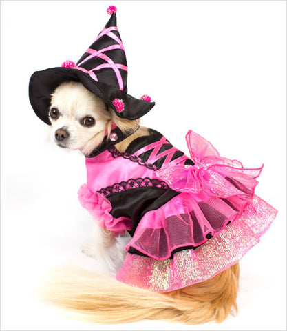 small dog wearing pink Witch costume