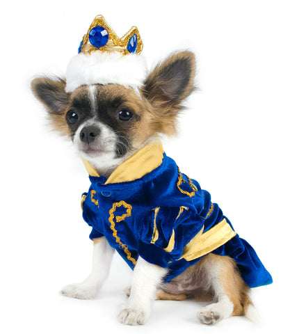Chihuahua Wearing Prince Charming Dog Costume