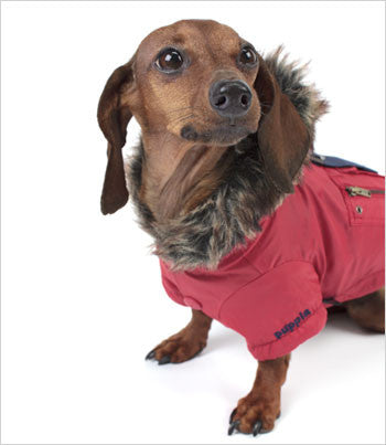 Puppia Red Dog Parka Jacket