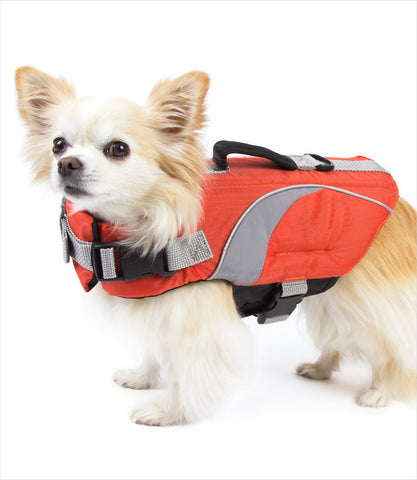 Chihuahua wearing Dog Life Jacket