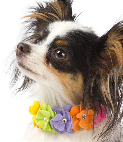 Dog wearing Susan Lanci Rainbow Tinkie's Garden Collar