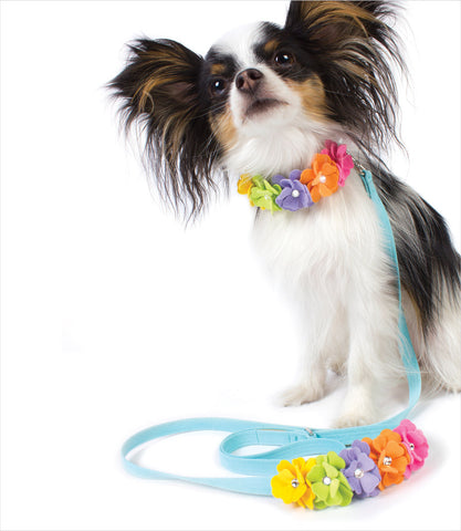 Papillon with Rainbow Tinkie's Garden Leash and Collar