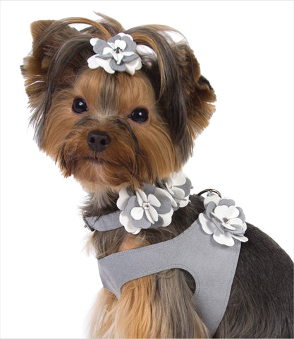 Yorkie wearing Susan Lanci Special Occasion Dog Harness