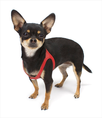Red Choke Free Dog Harness - Scrappy Pet