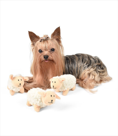 Sheep-Squeak-Toy-Yorkie