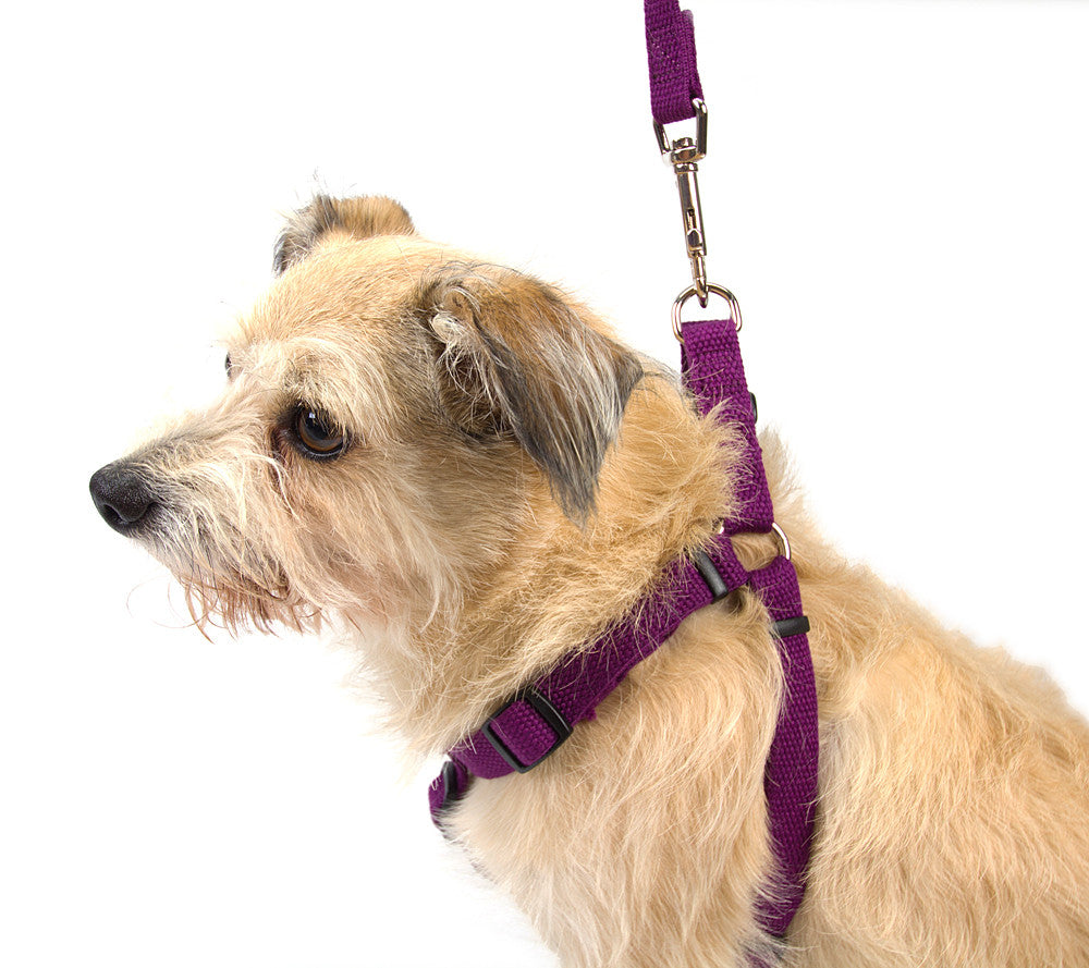 New earth soy dog harnesses gw little soy dog harness side view on dog pooptronica Images