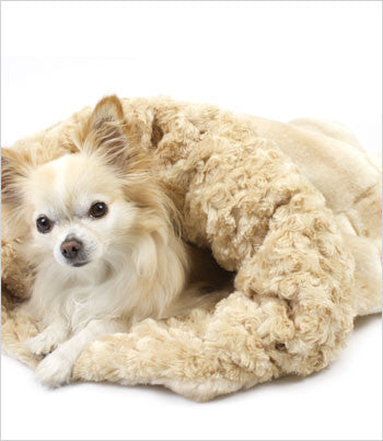 Susan Lanci Buff Chinchilla Cuddle Cup Dog Bed