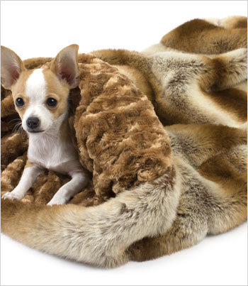Susan Lanci Golden Chinchilla Cuddle Cup Dog Bed