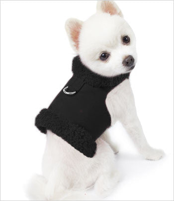 Pomeranian Wearing Black Harness Jacket