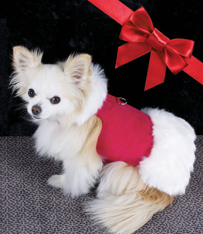 Chihuahua wearing Red with White Faux Fox Fur Dog Coat