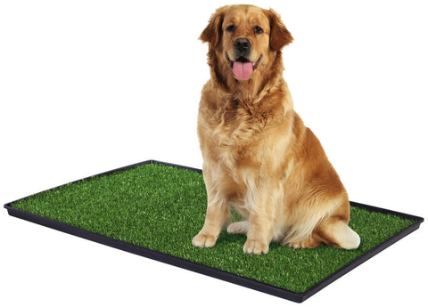large dog on Tinkle Turf dog potty