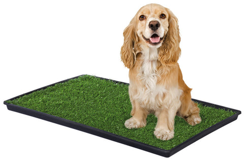 medium dog on Tinkle Turf dog potty