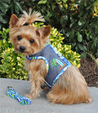 Yorkie in Cool Mesh Harness - Blue Surfboard
