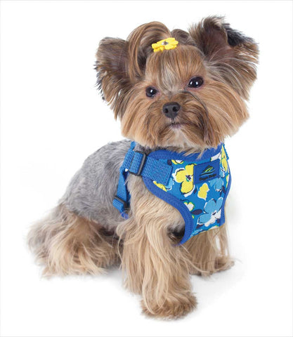 Yorkie in Hawaiian Blue Dog Harness