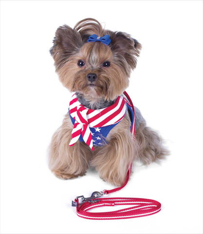Yorkie in EasyGO USA