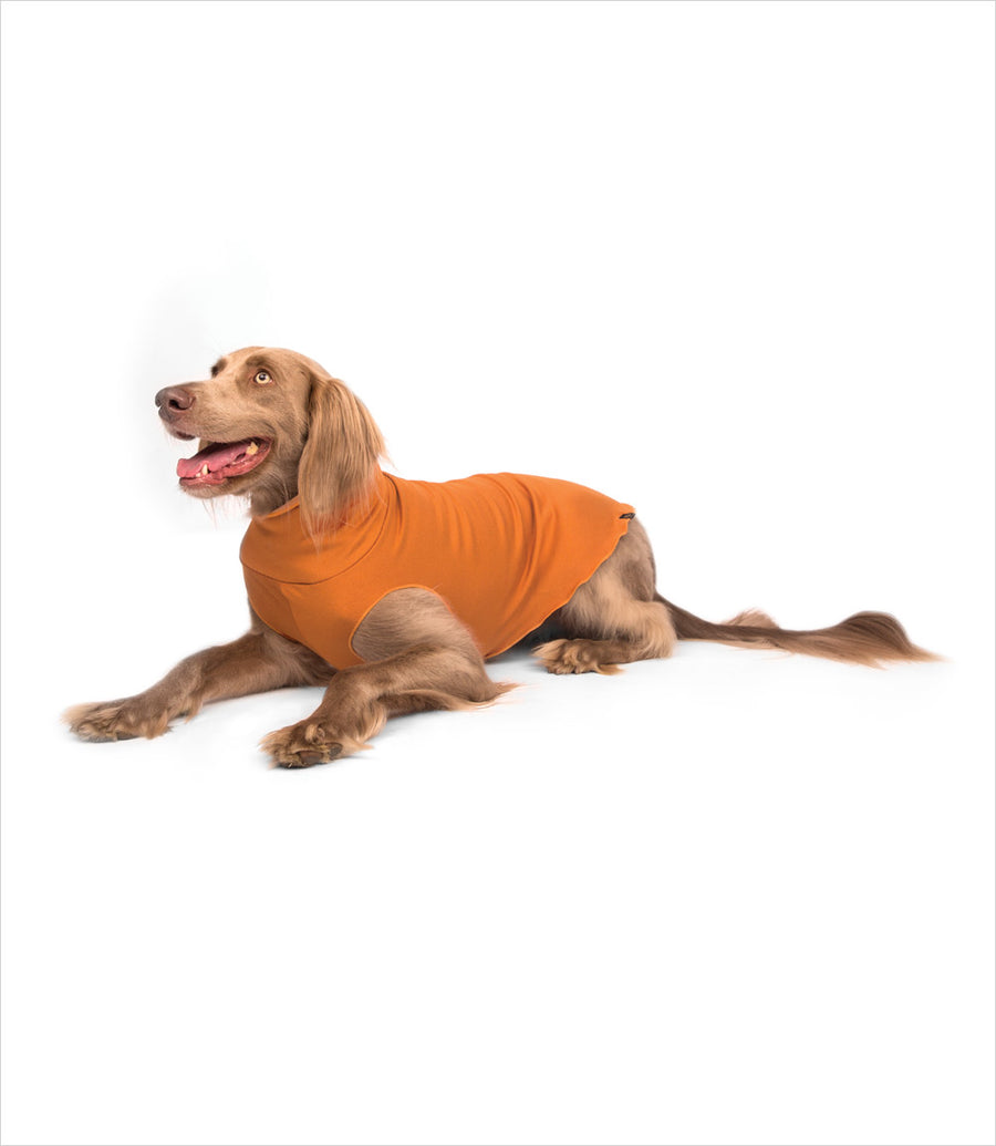 Gold Paw Santa Fe Pullover for Dogs