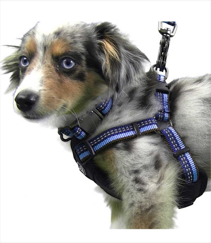 K9 Explorer harness on dog