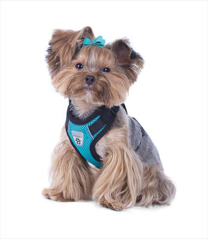 Yorkie in Teal Vented Car Vest Harness V2