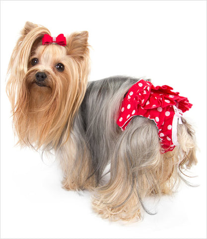 Yorkie Wearing Red Sanitary Dog Pants