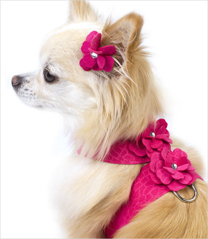 Chihuahua Wearing Raspberry Tinkie's Garden Dog Harness
