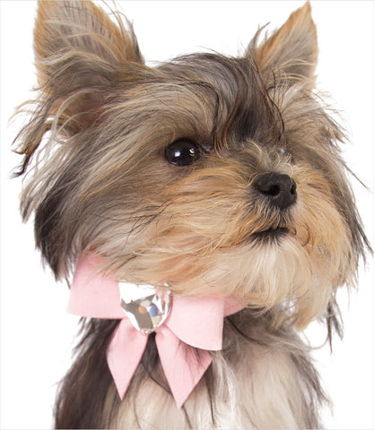 Susan Lanci Pink Tail Bow Heart Collar - Misa Minnie