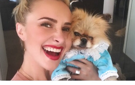 Fifi & Romeo & Hayden Panettiere & Giggy the Pom