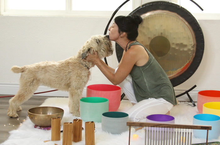 90 Minute Meditating with Animals Group Meditation + Sound Bath with your Animals (Up to 6 People)