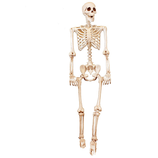 posable skeleton