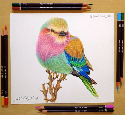 Art-n-Fly oil based colored pencils for drawing