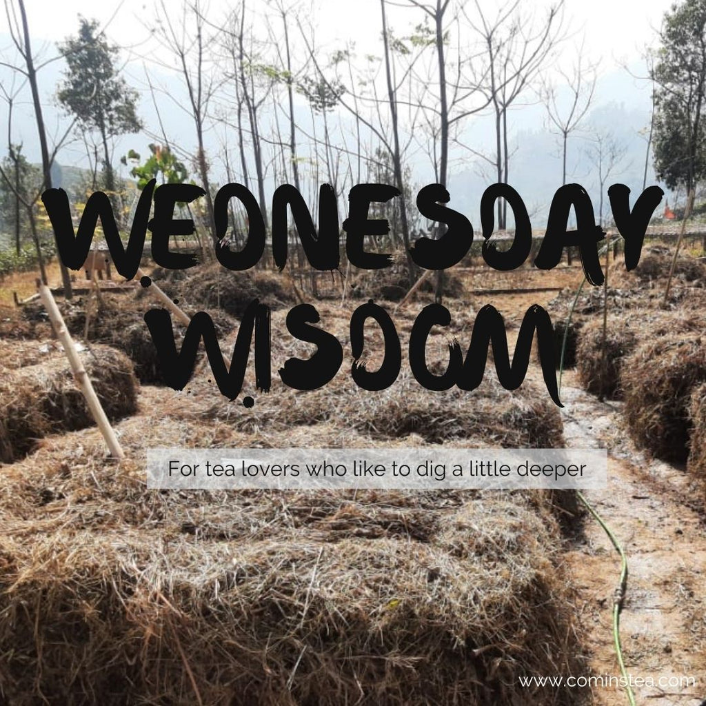 Wednesday Wisdom with KC & Michelle Week 6 : Winter in Darjeeling & Assam : A Glimpse at activity in January & February