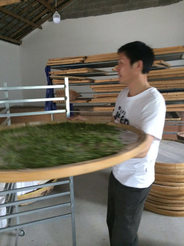 Loading a bamboo tray full of tea