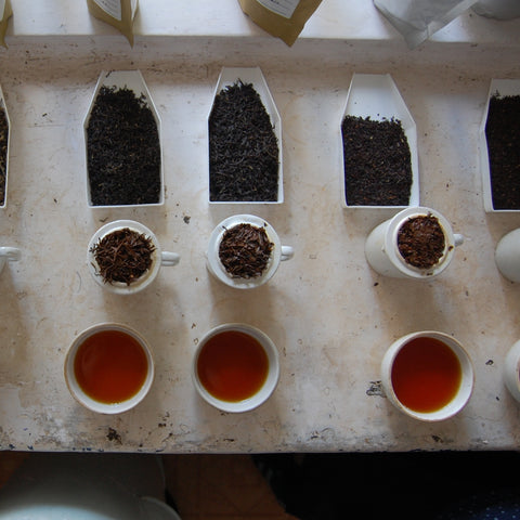 EXPLORATION : BLACK TEA